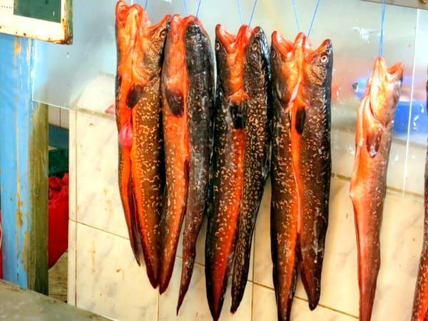 Fish hanging at the Coquimbo Fish Market