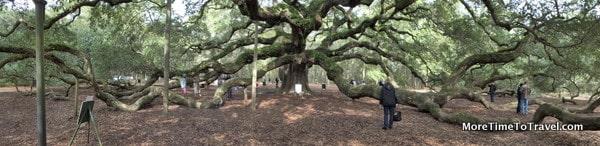 Panoramic view of Angel Oak