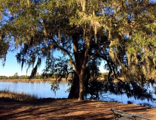 Scenic bank of the Ashley River