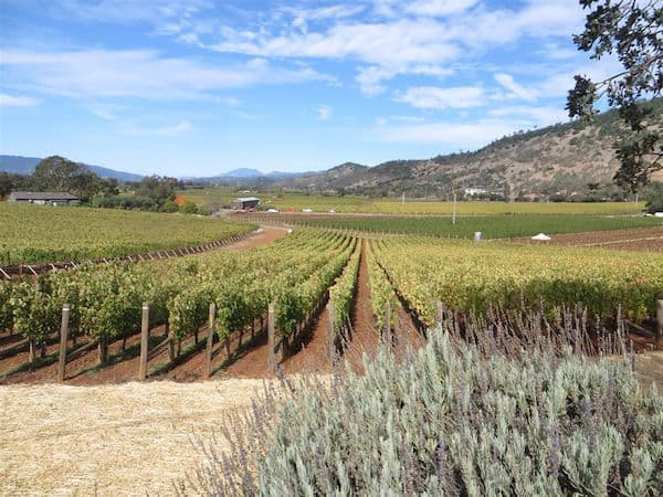 Napa Valley vineyards and hills (Credit: John and Sandra Nowlan)