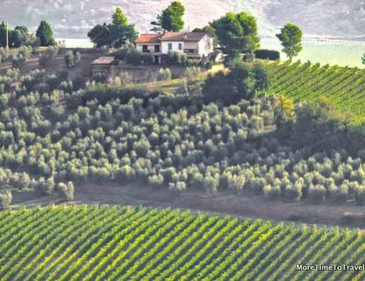 Grape vines and olive trees dot the Umbrian countryside