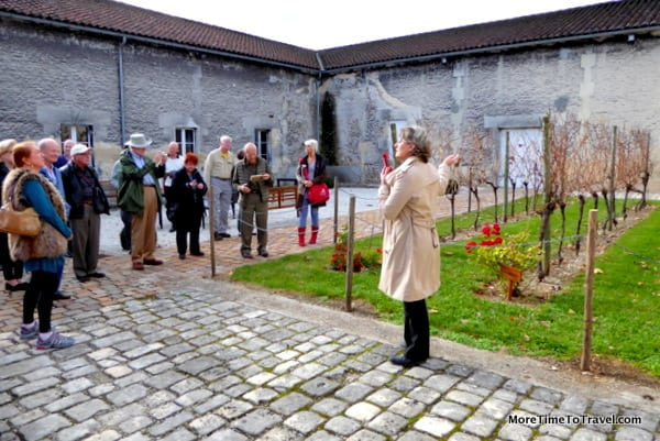 In Cognac France, our guide shows the three types of grapes harvested for cognac