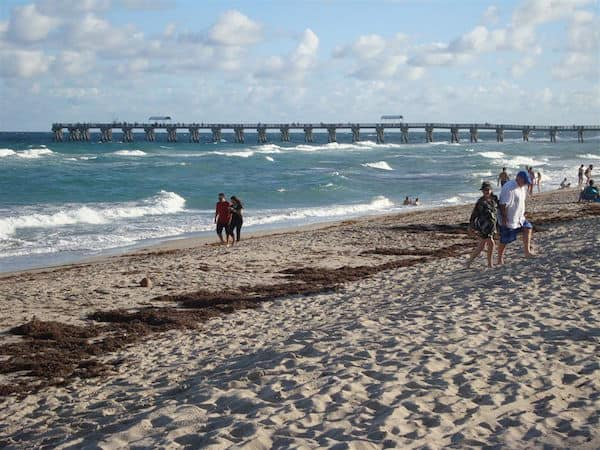 The Pier at Palm Beach (Credit: John and Sandra Nowlan)