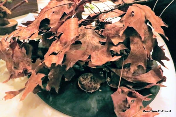 A chance to forage for chanterelle mushrooms and chestnuts under the leaves