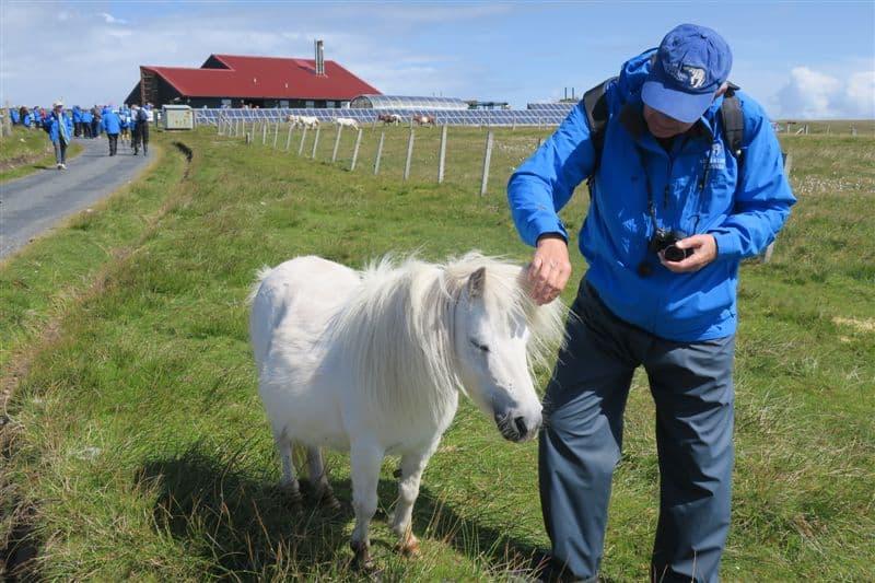 Friendly Shetland Pony