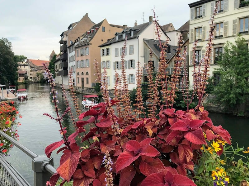 One Day in Strasbourg: Plants hanging over a bridge
