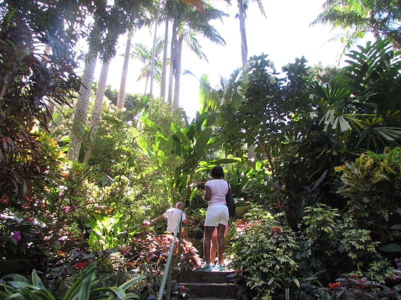 Hunte's Gardens: Tall palms and dense foliage