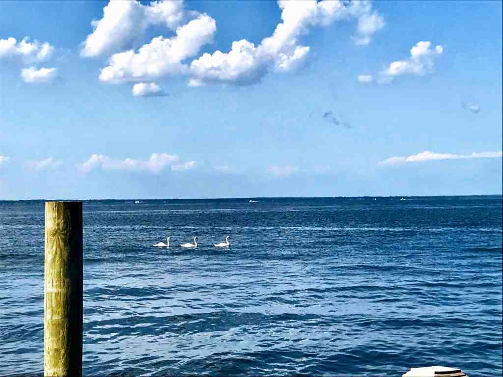 What to do on Fire Island: The view from Matthew's Seafood House on Ocean Beach