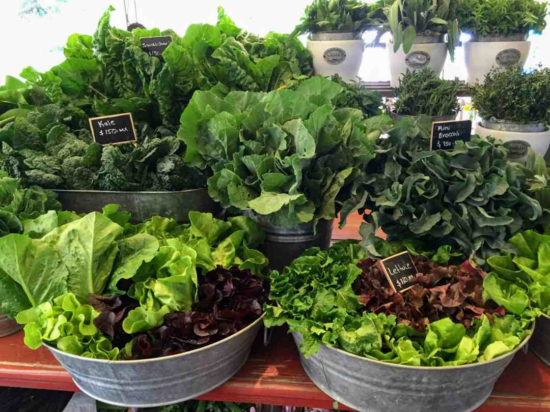 farmers market - Different varieties of lettuce