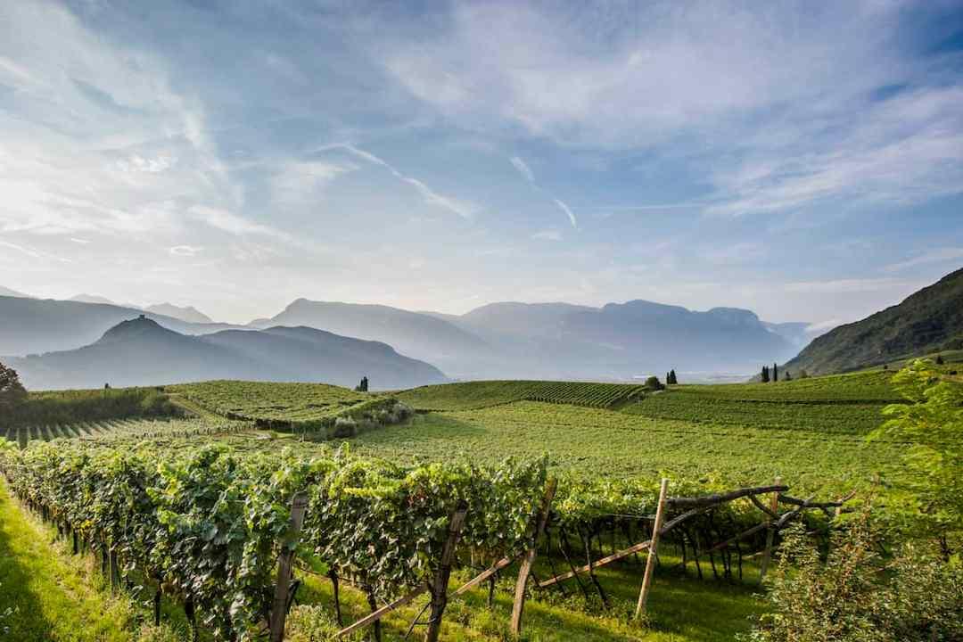 Vineyards in Alto Adige (Credit: IDM Südtirol-Alto Adige/Florian Andergassen)