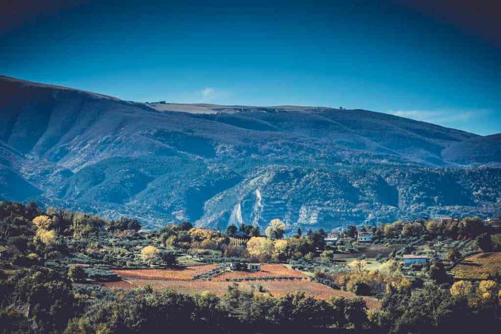 One vineyard at the Masciarelli Winery