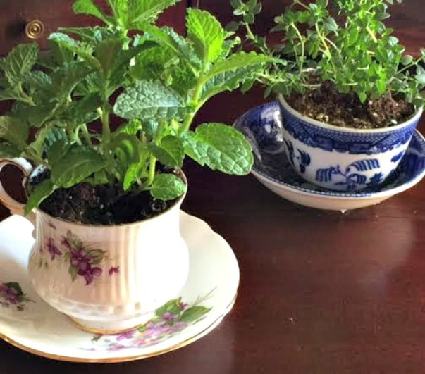 teacup garden two Goodwill