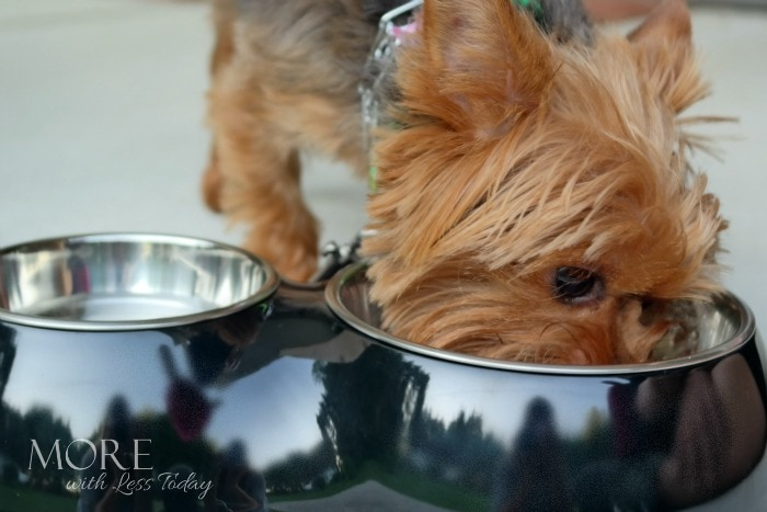 Healthy Eating Habits for Your Dog