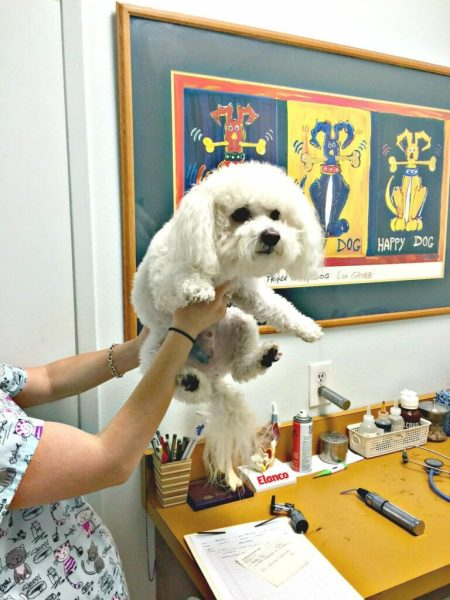 find cheapest prescriptions for pets