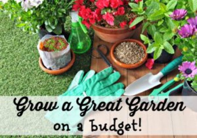 Grow a great garden on a budget with the easiest plants to grow! Now is a great time to start your garden. Save money and eat better!