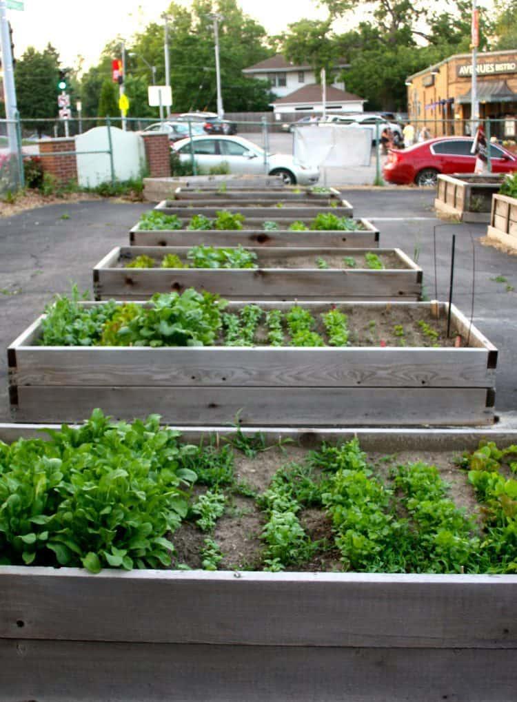 Best 20 Vegetable Garden Design Ideas for Green Living ... on Vegetable Garden Ideas For Backyard id=22952