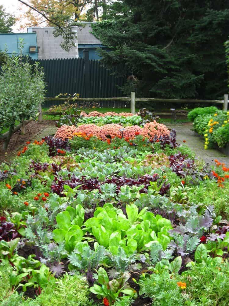 Best 20 Vegetable Garden Design Ideas for Green Living ...