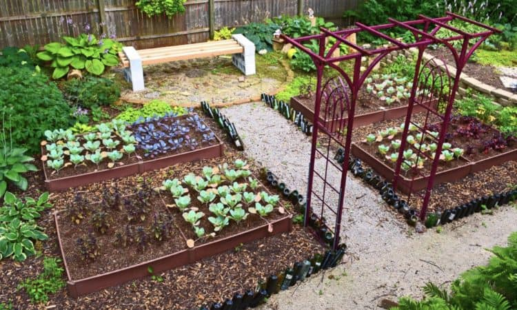 Modern Vegetable Garden Design Ideas