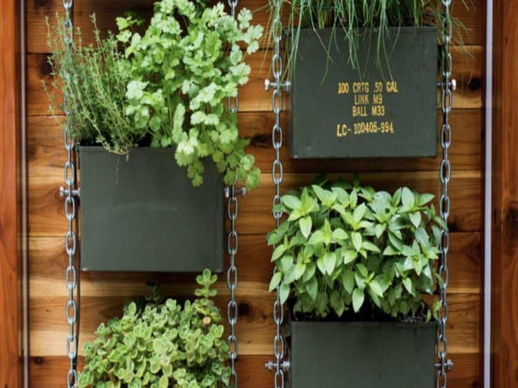 DIY Vertical Garden Ideas for Indoors and Outdoors - MORFLORA
