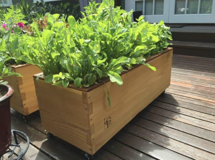 Charming Self Watering Planters Part - 4: MORFLORA