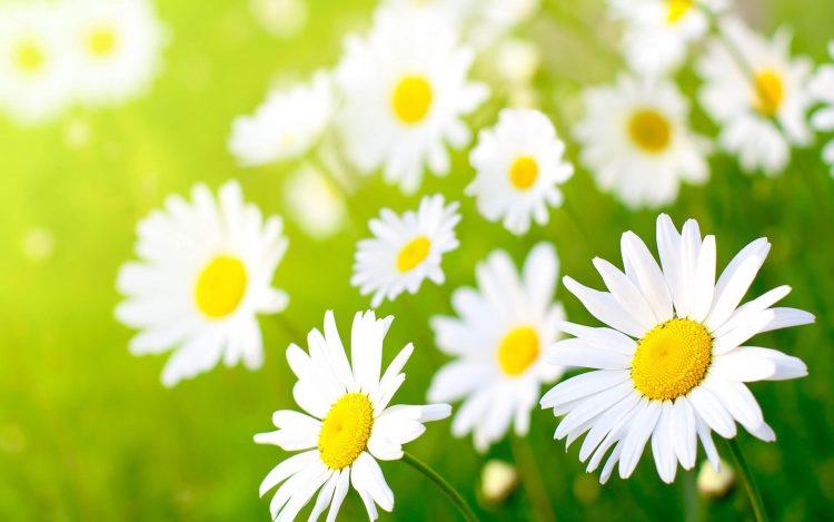 45 Common Types of Flowers - MORFLORA