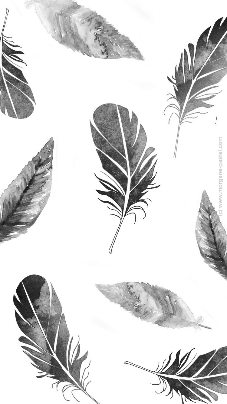fond-ecran-plume noir free download - Morgane Pastel