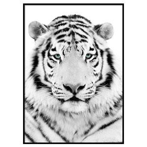 affiche white tiger desenio