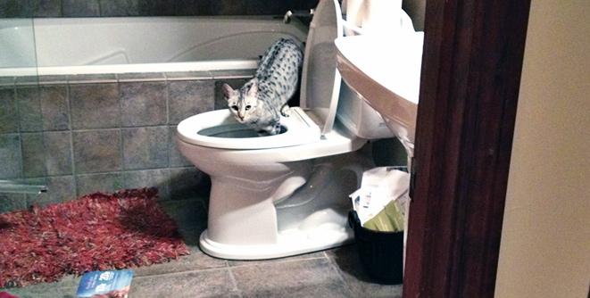 lola-toilet