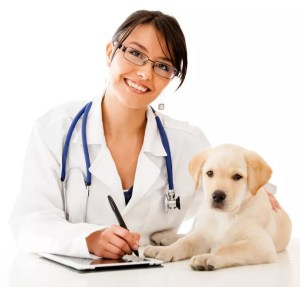 morgellons disease in dogs
