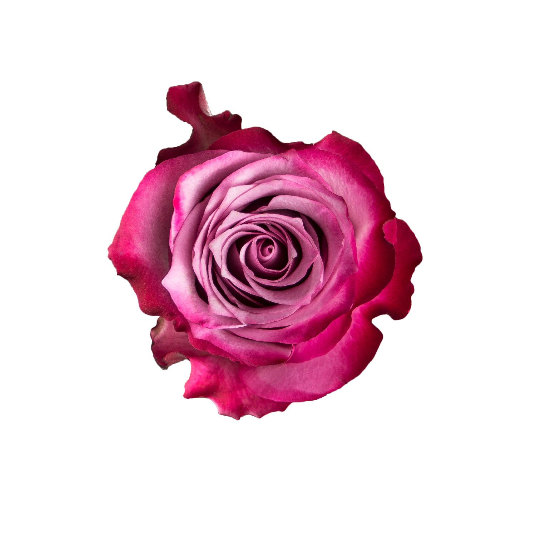 "Paper Light Shade Motiv ""Rose"" - The Special One"