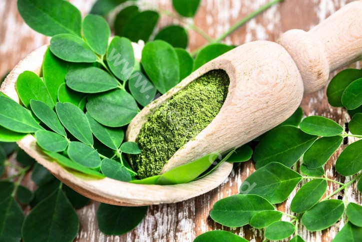 Morifa Moringa Powder Bulk Seller : Benefits & Fun Way To Consume