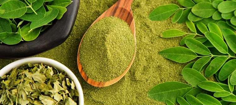 Get to Know Moringa Benefits for Skin Beauty