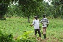 Parcelle cultivable