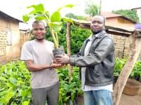 Agroforesterie Togo Morija