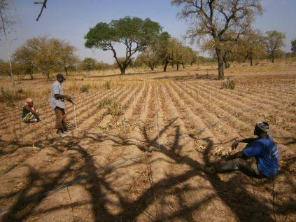 JM desertification