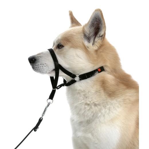 Collier d'éducation Dog Control type Halti