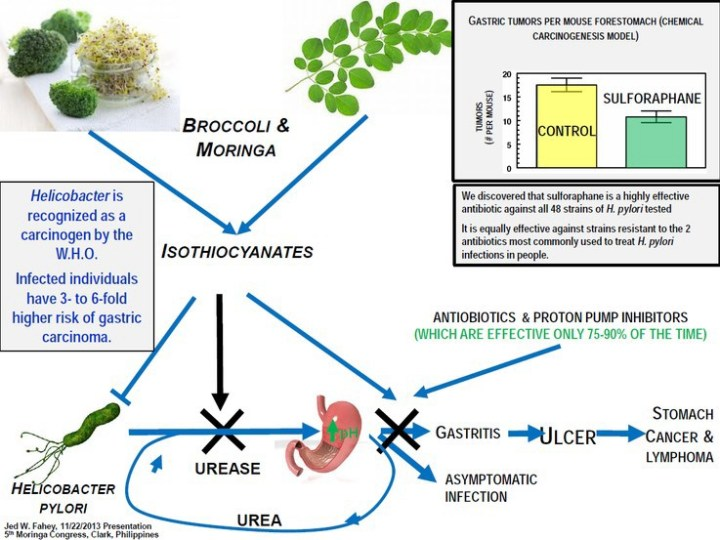 Moringa how Isothiocyanates work