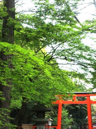下鴨神社 新緑と鳥居