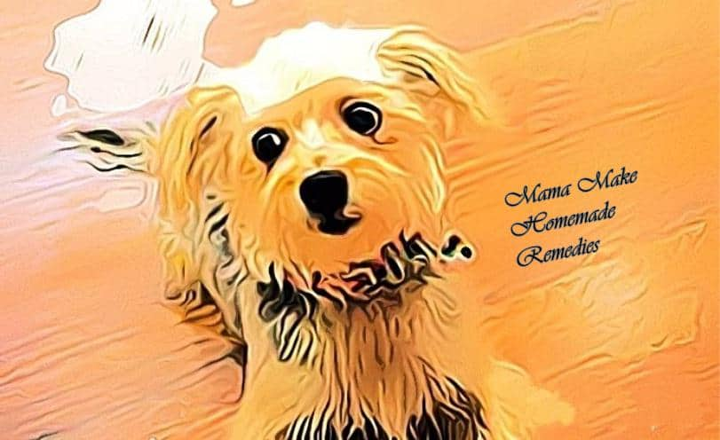 morkie dog allergies sneezing, Home Remedies, Dog Home Remedies