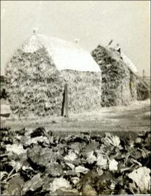 Man thatching straw stacks at Pinfold, Tingley