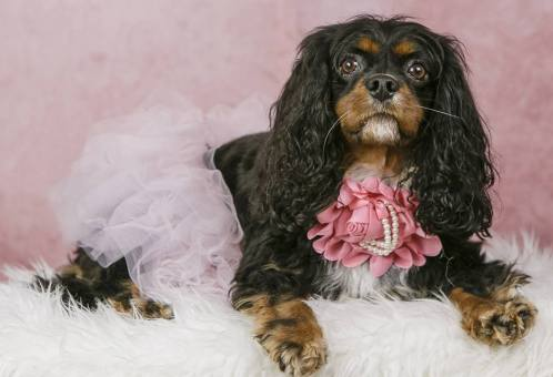 MorLove-Pet-Photographer-Studio-Dress-Up-Dog