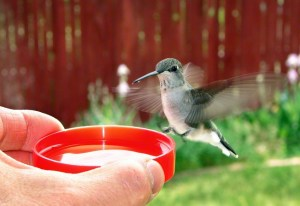 hummingbird-851281-gallery