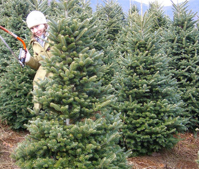 Whether Youre Choosing The Perfect Christmas Tree Learning In A Workshop With Friends Or Picking Out A Great Gift For Grandma N C Farms Are Open This