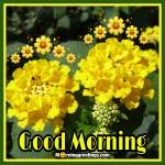 20 Beautiful Good Morning Lantana Flower Images Morning Greetings Morning Quotes And Wishes Images