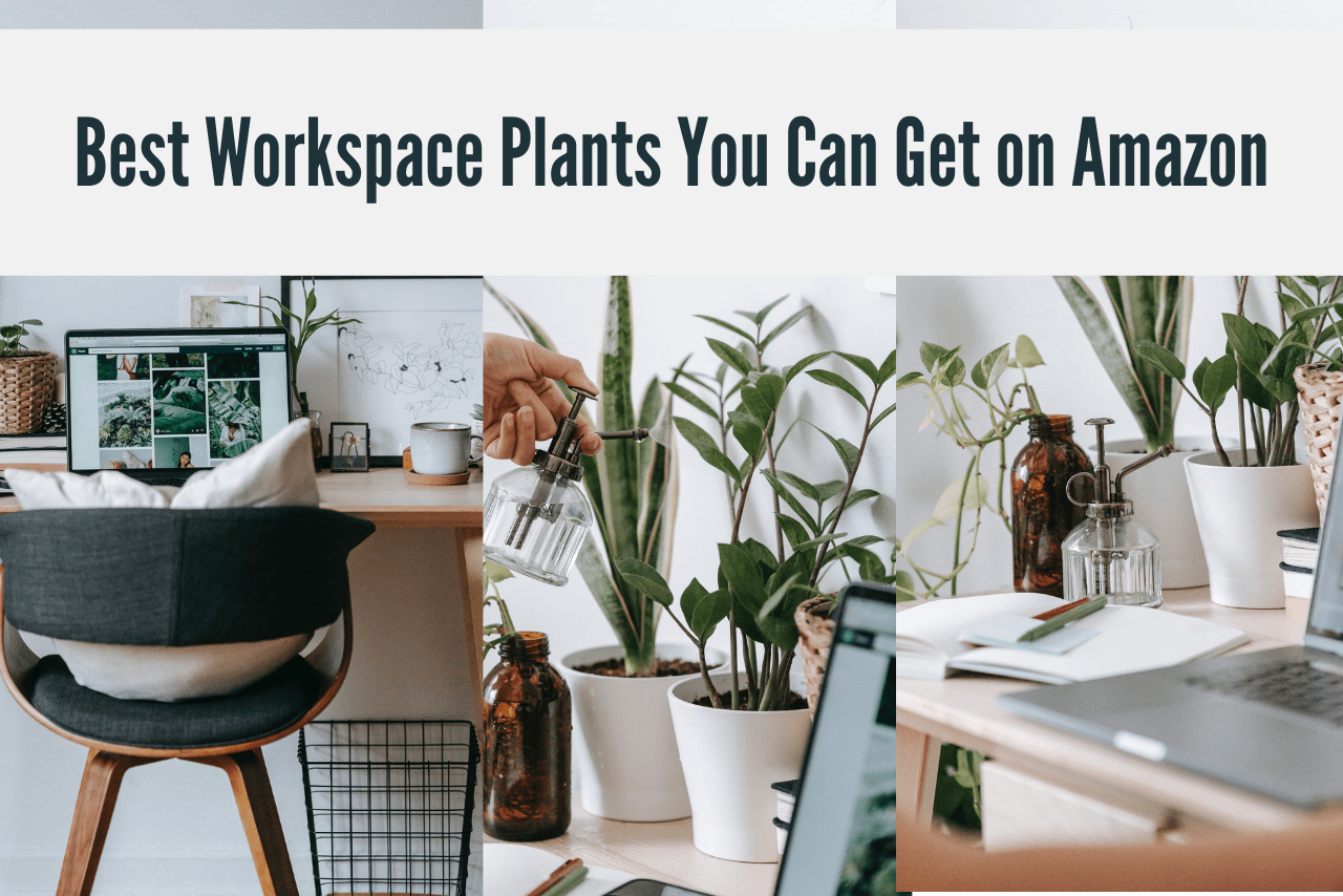 The Best Workspace Plants You Can Get on Amazon