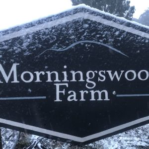 Winter has come to Morningswood Farm