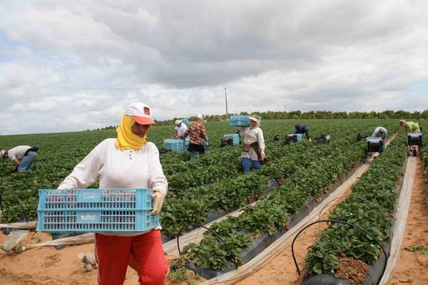 Image result for morocco agriculture