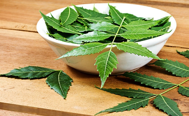 This Plant is Called Gods Gift as It Can Cure Diabetes ...