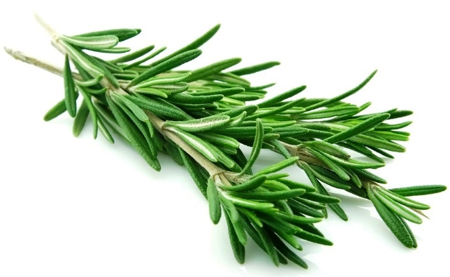 Rosemary - 8 Trusted Home Remedies For Instant Relief From Headache