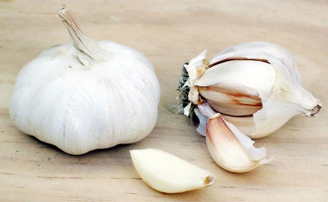 Garlic (3)